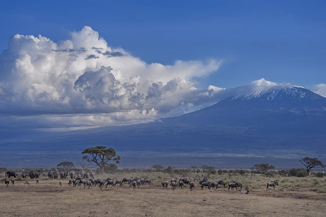 Conalco-Amboseli-Nationalpark