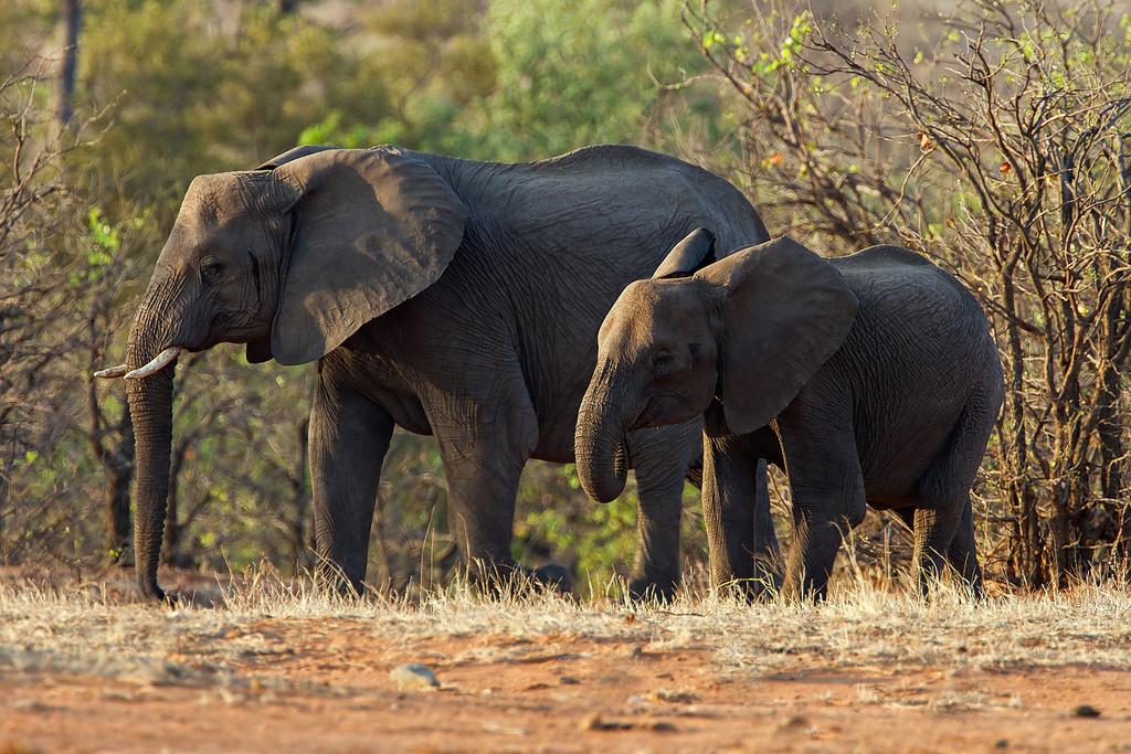 Conalco-Elefanten-Krueger-Nationalpark