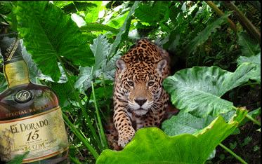 leftWP-jaguar